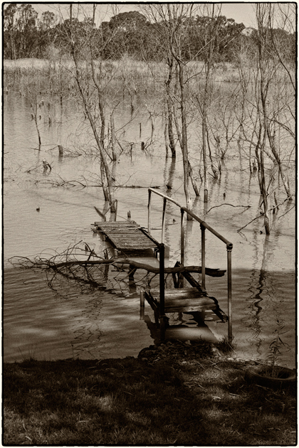 flooded-trees
