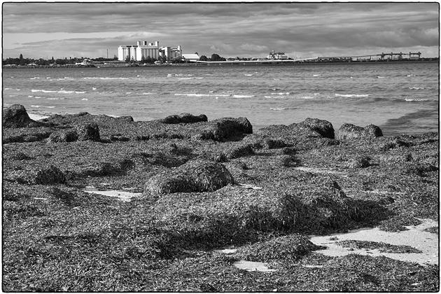 wallaroo jetty across bay