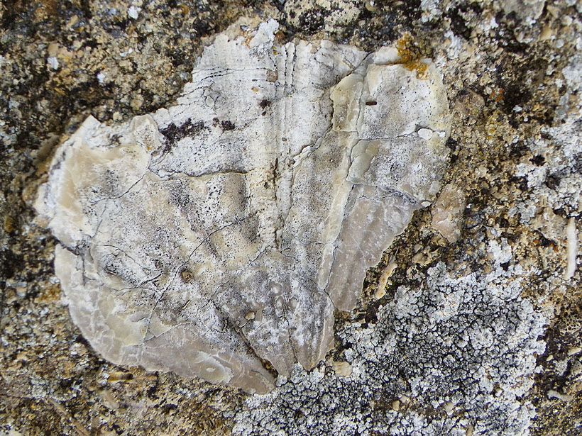 ancient seabed fossil shells