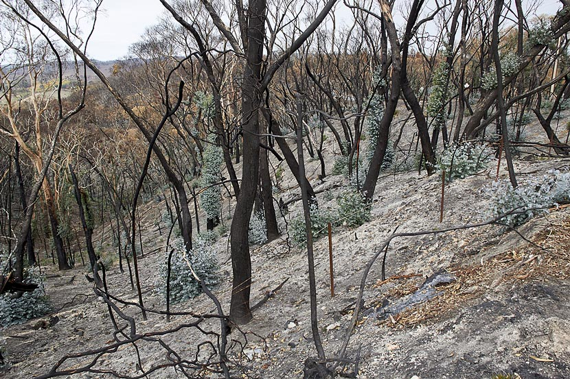 burnt forest on hill