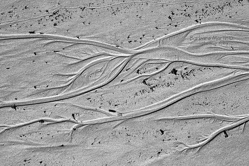 Creeks in the Sand_Barbara Martin