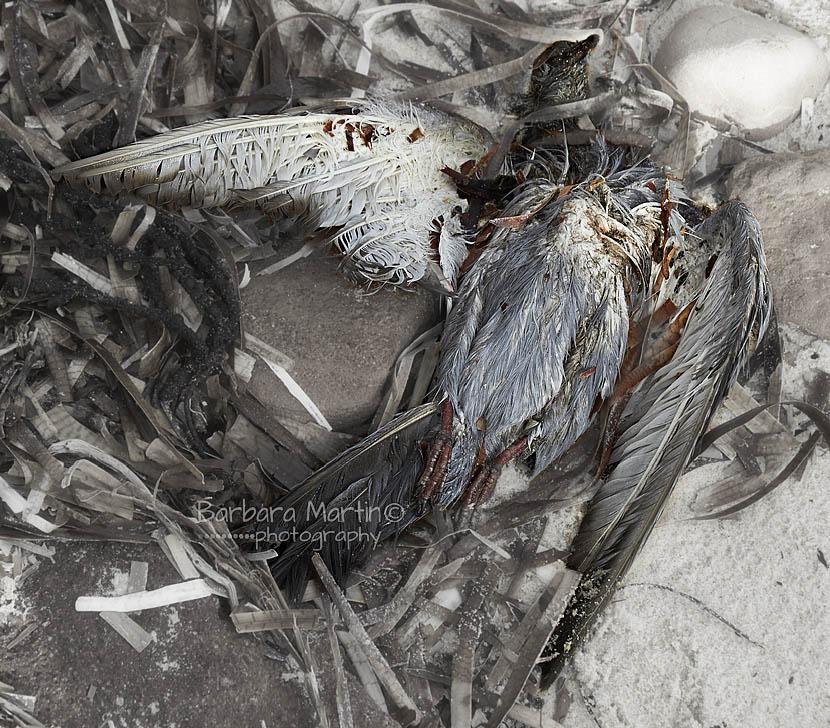 Dead Bird on Beach_Barbara Marti