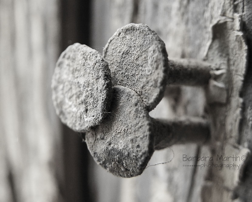 Three Nails_Barbara Martin