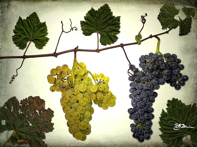 Vineyard: A Study