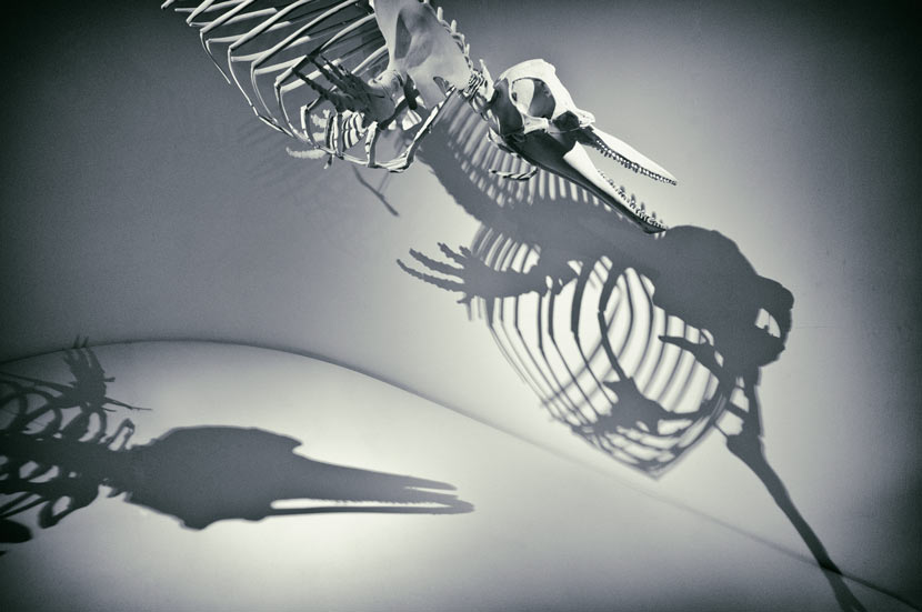 dolphin-exhibit